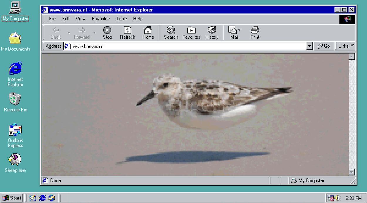 Afbeelding van Roekoe! De Internethoekje Vogelspecial