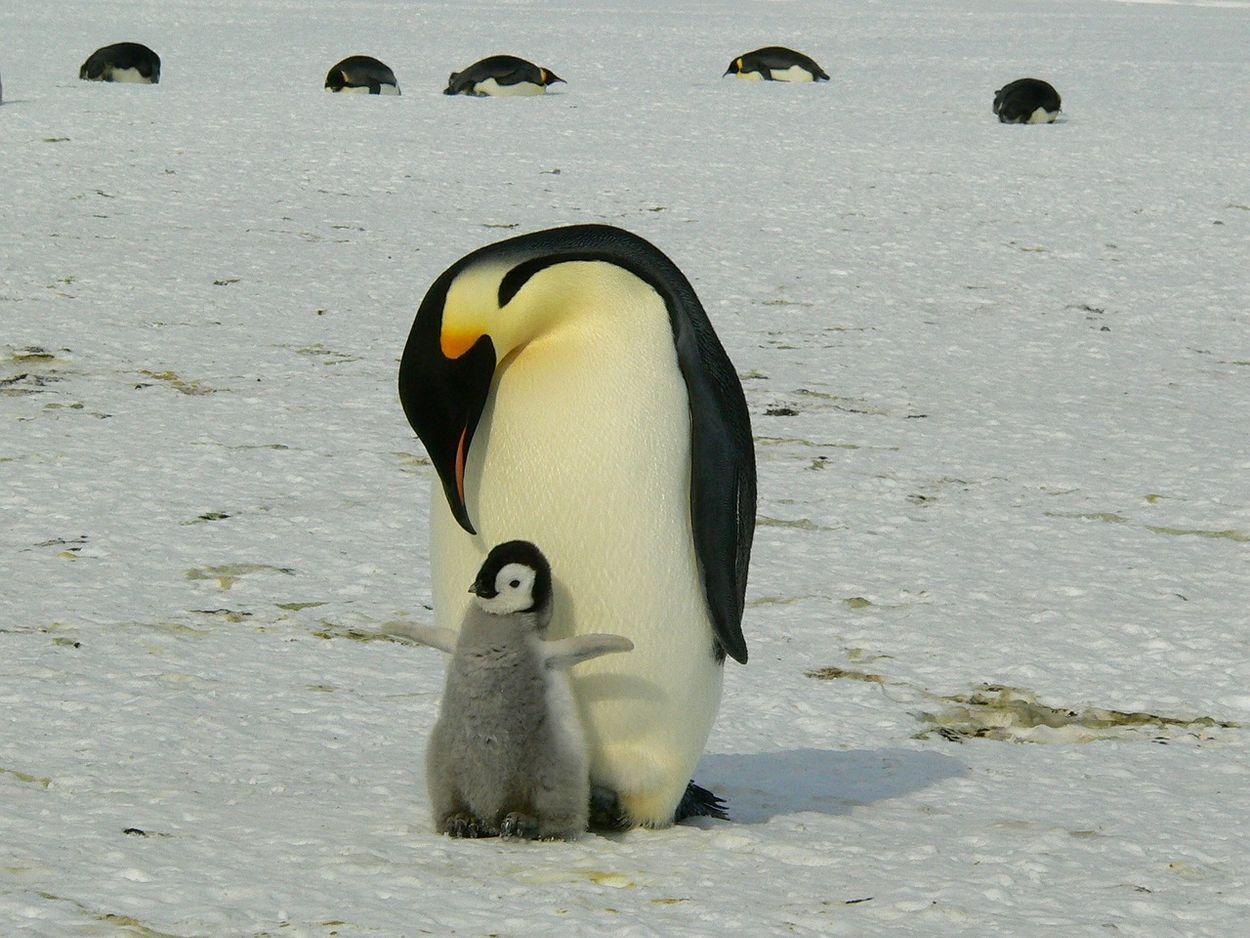 Afbeelding van Hoe ziet Antarctica er in de toekomst uit?