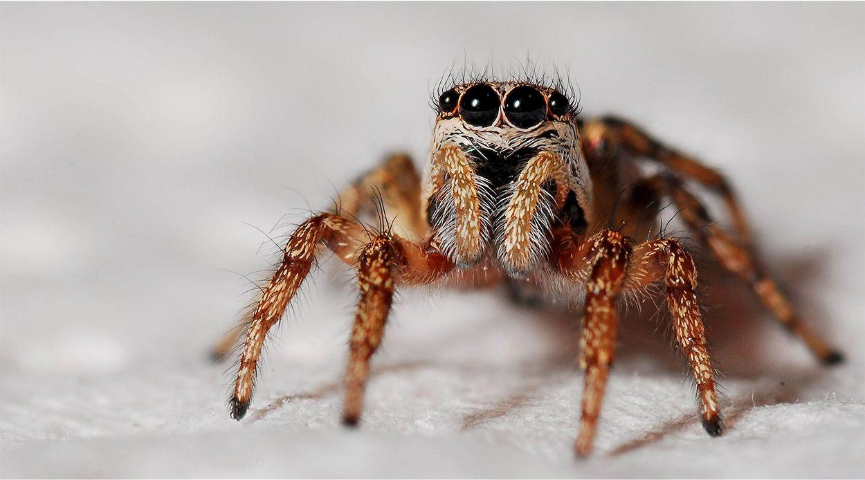 Afbeelding van Man brandt huis plat vanwege spinnen