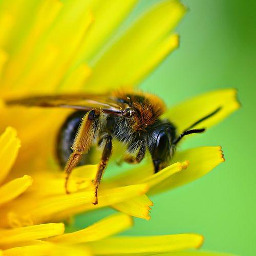 Afbeelding van De insectenpopulatie neemt enorm af. Hoe erg is dat?