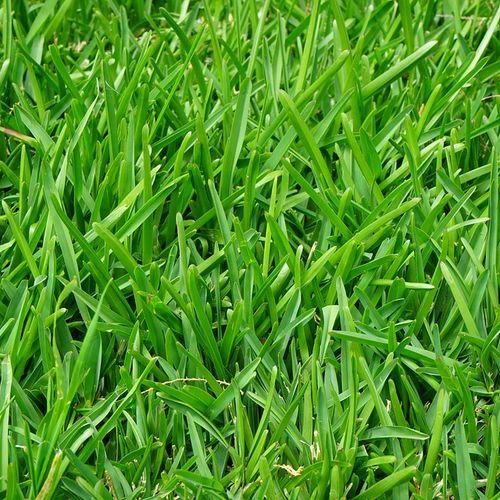 Afbeelding van Je kan nu papier maken van gras