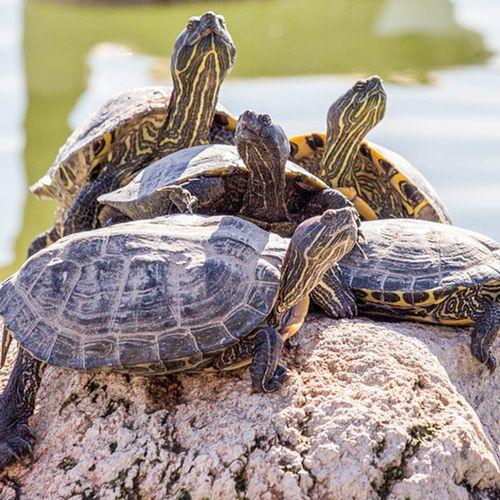 Afbeelding van Britse toerist vindt schildpad terug in vagina